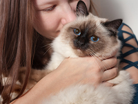 Cindy-cat.jpg