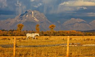 Horse and Teton