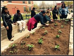 The Chicago African Americans in Philanthropy chapter put some much needed tlc in the community garden at Hope Manor I